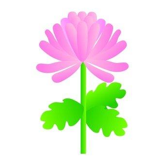 Autumn Festival - Chrysanthemum (Pink)
