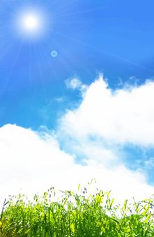 한여름의 태양