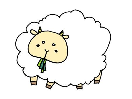 Sheep eating bait 1 2