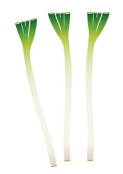 vegetable_ leek
