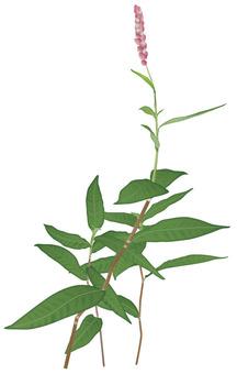Inotades / weeds