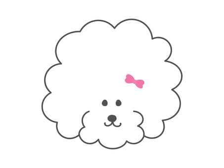 Toy poodle girl