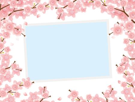 봄의 사진
