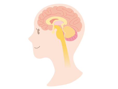 Human body _ brain