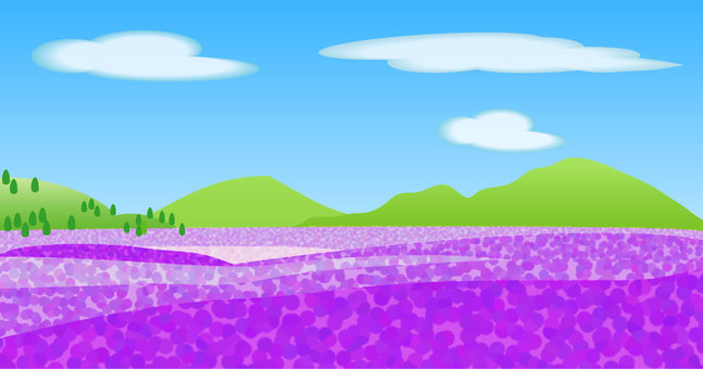 Scenery of lavender field
