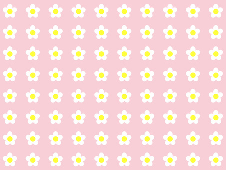 White flower × Pink