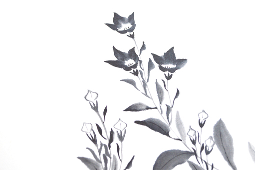 Chinese ink bellflower