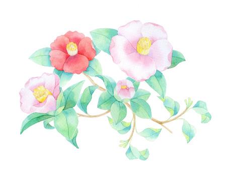 Camellia pink ★ 0453-F