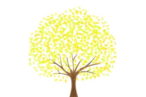 Ginkgo tree 2