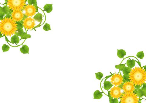 黃花可愛3