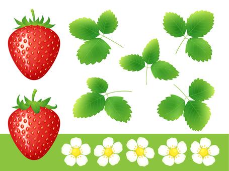 리얼한 딸기 세트