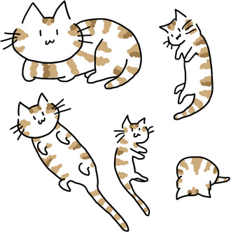 Cat assortment