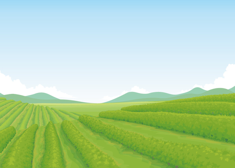Vineyard background illustration 02