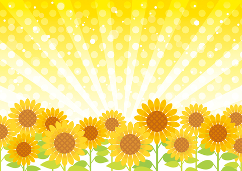 Sunflower and concentration line background 01