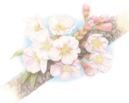 桜 2014 ★ 0003-S
