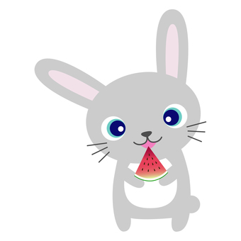 Watermelon eating rabbit