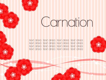 Carnation 2018_05