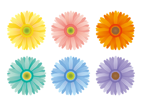 Gerbera different color set