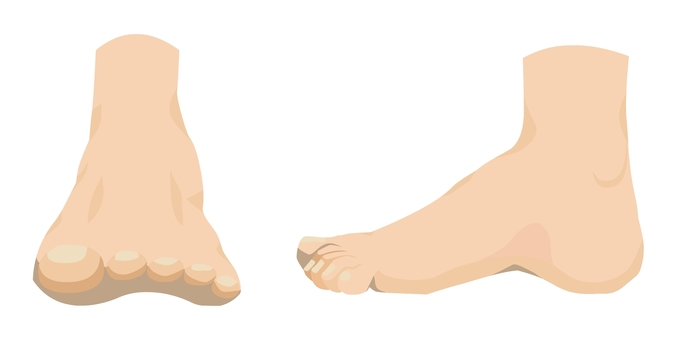 Front and side of the foot