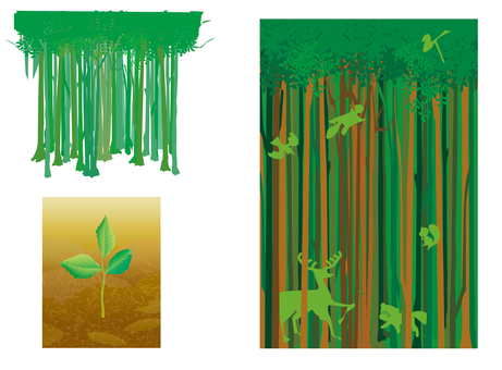 Forest & animal