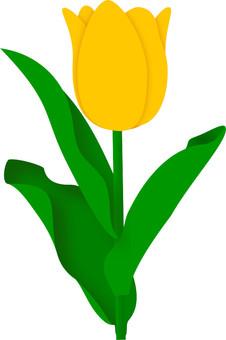 tulip 1-1