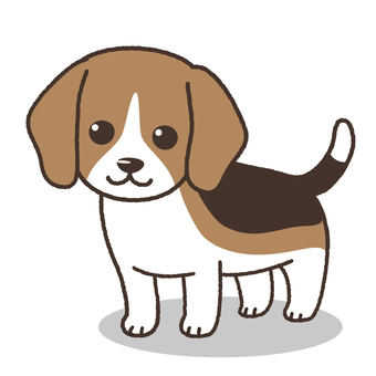 Beagle dog (puppy)