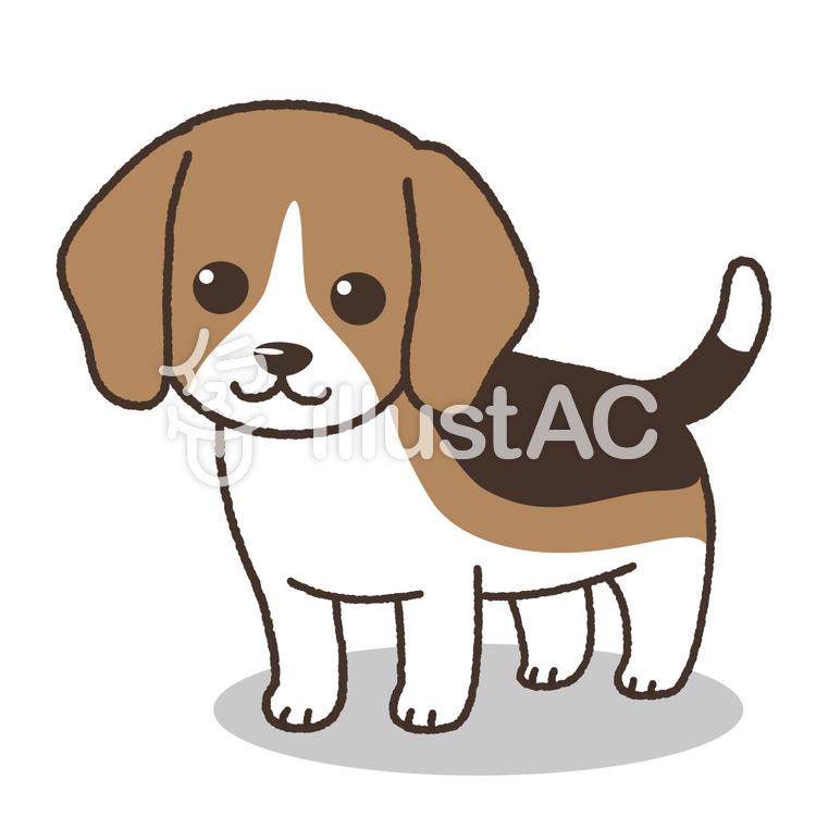 ビーグル犬(子犬)
