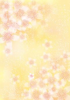 벚꽃의 꽃 164