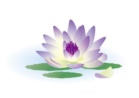 Lotus flower 02