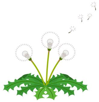 Dandelion (fluff