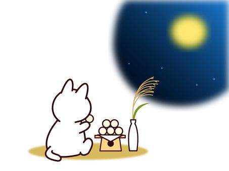 Cat (March / March Autumn)