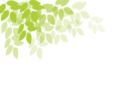 초여름의 새잎 2