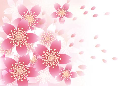 벚꽃의 꽃 87