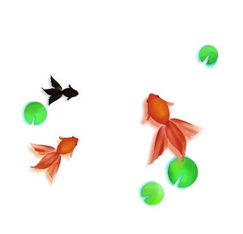 Goldfish (white background)