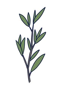 Tea tree (tea tree)