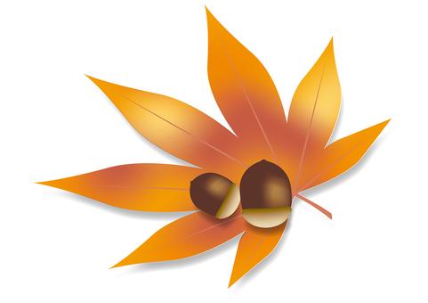Autumn leaves & acorns 10