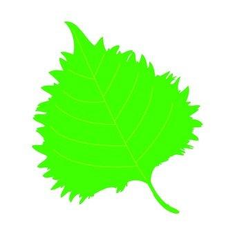 Illustration of a large leaf