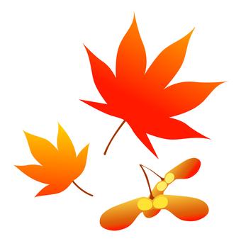 Maple (Autumn)