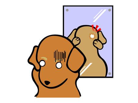 Dog alopecia areata (head)