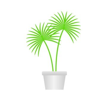 Houseplant - Biloys palm