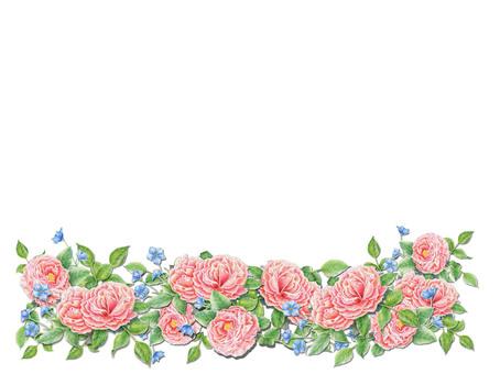 Rose (sideways) ★ 0212-R