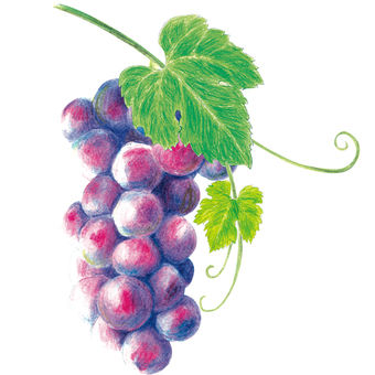 Grape color pencil A