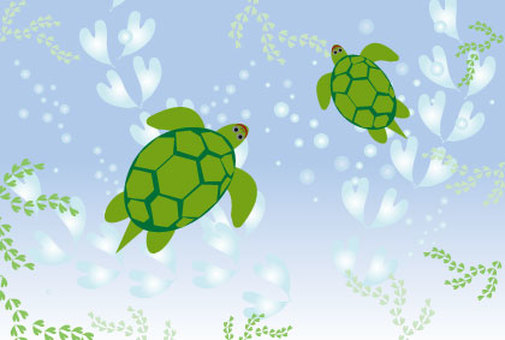 Green sea turtle and summer sea image