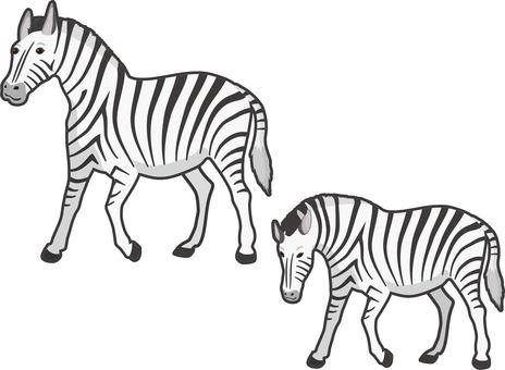 Zebra edged