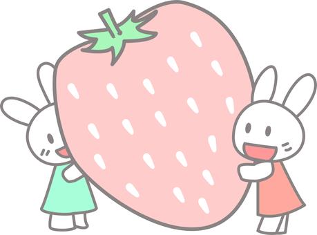 딸기와 토끼