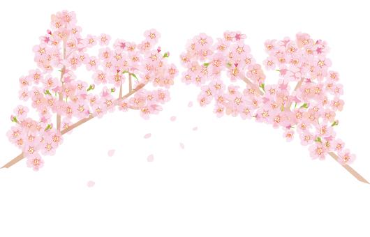 벚꽃 가득