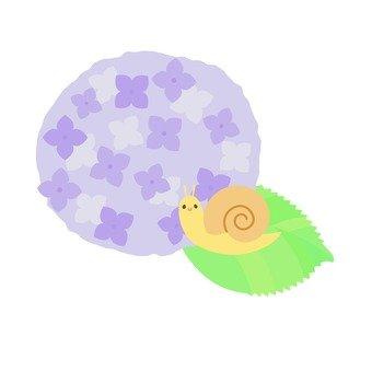 수국의 잎 위에 오른 달팽이