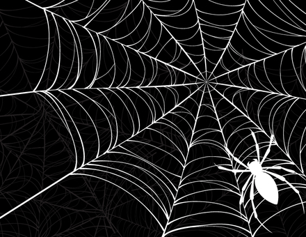 Joro gumo _ spider and nest background