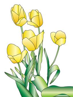 Tulip Yellow 5
