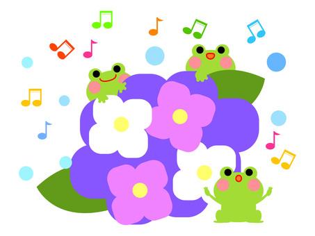 アジサイとカエルの合唱